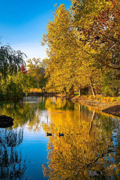 Fall-Colors-Chateau-Montelena-Winery_Napa-Valley-Wine-Country-California-Fall-Colours-Reflections-Anniversary-Gift-Wine-Country-Wine-Lover-Gift_DSC2836
