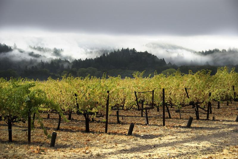 Wine_country_napa_grapes_fall1