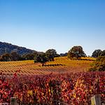 Napa and Sonoma Vines