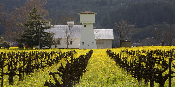 Old Vines & Mustard 0658p