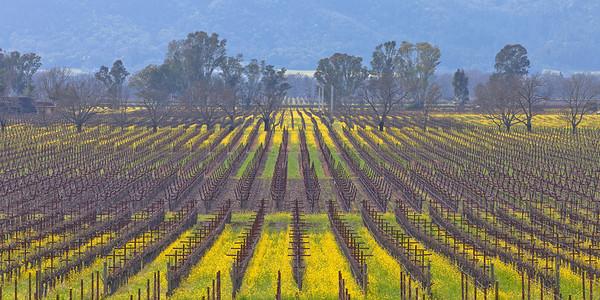 Napa Valley Vineyards 4979p
