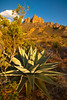 The Iconic Agave And The Chiso Mountains - Big Bend National Park, Texas