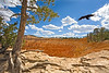 Ravin flys over Bryce Canyon National Park