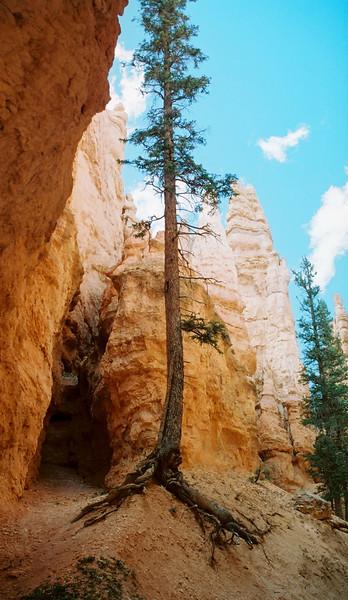 Navajo Loope trail