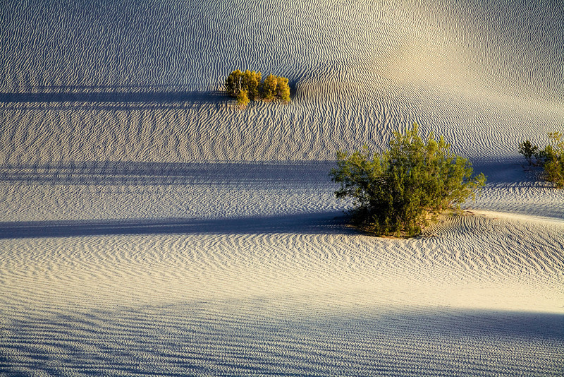 Sandy ridges in the dunes at sunrise in Death Valley National Park. Image was awarded 3rd place Large Color prints, Camera Rochester