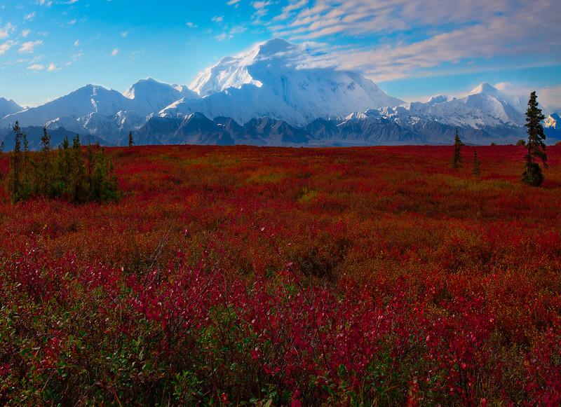 On The Valley Floors Beneath Denali - Denali National Park, Alaska