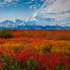 Blowing Winds On Top Of Denali Peak In Autumn - Denali National Park, Alaska