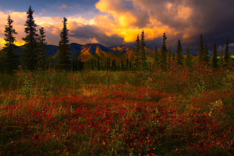 A Sliver Of Storm Light - Denali National Park, Alaska