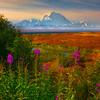 The Changing Of Seasons In Denali - Denali National Park, Alaska