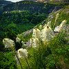 Beargrass Under The Spotlight - Going To The Sun Road, Glacier National Park, Montana
