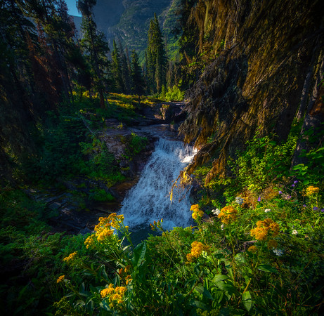 Cliffside Flowers Overlooking Waterfall - Virginia Falls,  Glacier National Park, Montana