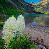 Beargrass On Shore Of Grinnell Lake Grinnell Lake, Glacier National Park, Montana