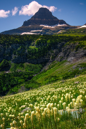 Beargrass Underneath Mt Reynolds - Going To The Sun Road, Glacier National Park, Montana