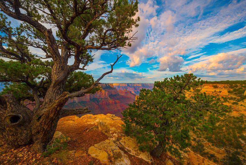 Grand Canyon Edgeside - North Rim, Grand Canyon Nat Park, Arizona
