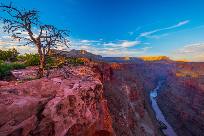 Toroweap Overlook And Unusual Tree - Toroweap Overlook, Grand Canyon Nat Park, Arizona