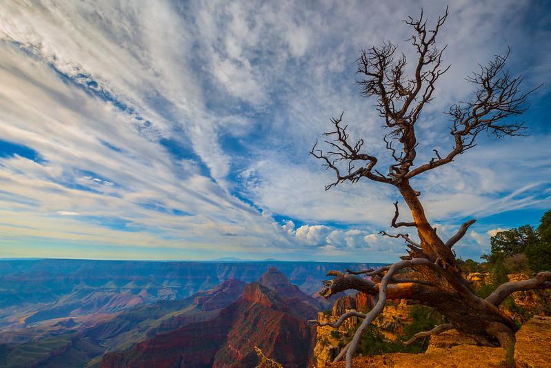 Hanging On By A Thread - North Rim, Grand Canyon Nat Park, Arizona