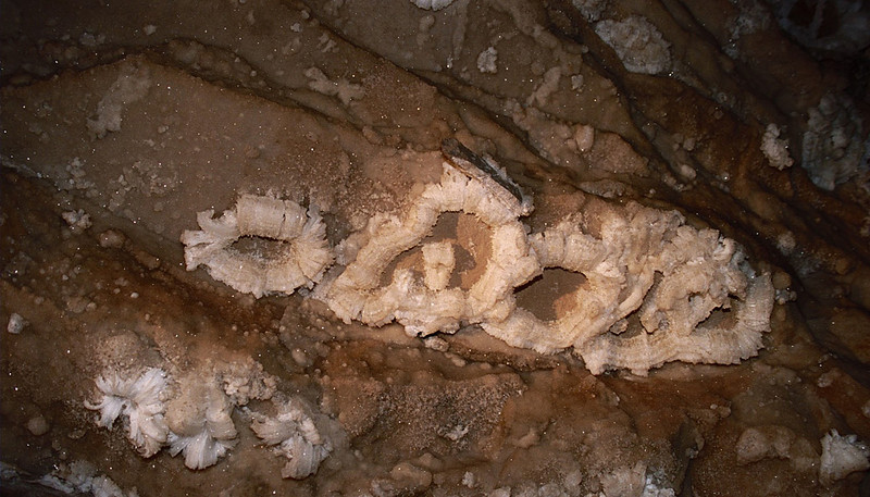 Gypsum Flowers, very delicate Mammoth Cave national Park