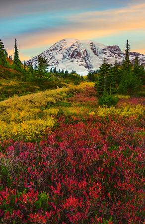 Array Of Fall Colors At Paradise  - Mount Rainier National Park, Washington