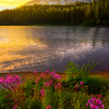 Wildflowers And Sunrise At Reflection Lakes