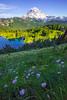 Daisies On Tolmie Peak Trail Beneath Rainier -Tolmie Peak, Mount Rainier National Park, WA
