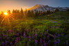 Mt Rainier And Sunset From Dead Horse Creek - Dead Horse Creek Trail, Mount Rainier National Park, WA