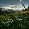 Rainier Framed By The Elements - Mount Rainier National Park, WA