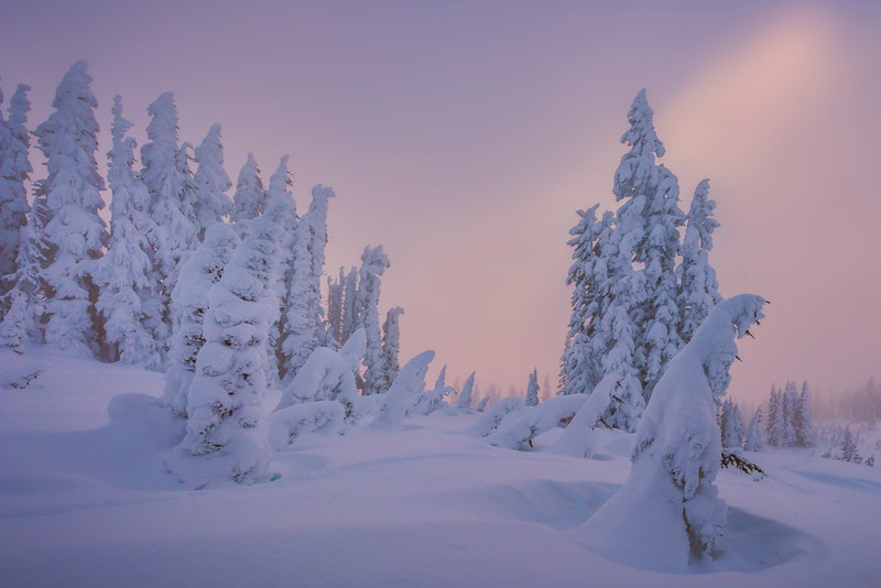 Sun Begin Its Descent On The Winter Snow - Paradise Area, Mount Rainier National Park, WA