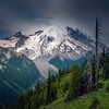 Mt Rainier And White River From Silver Forest - Mount Rainier National Park, WA