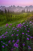 Deep Purples Under Twilight Pinks - Dead Horse Creek Trail, Mount Rainier National Park, WA