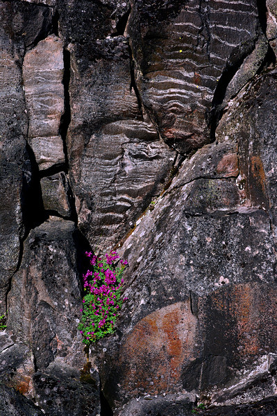 Wildflowers making a home in a rock formation
