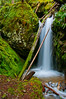 Mount Rainier Forest Waterfall