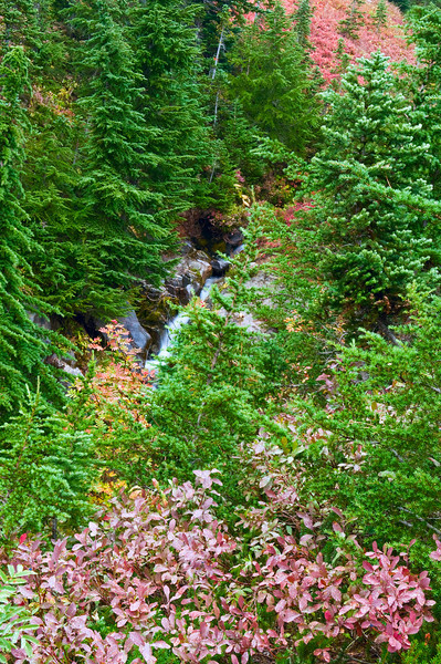 View from a trail near the Paradise River, Mount Rainier National Park
