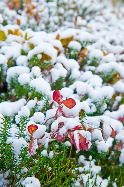 The first dusting of snow in the Paradise Valley, Mount Rainier National Park, Washington