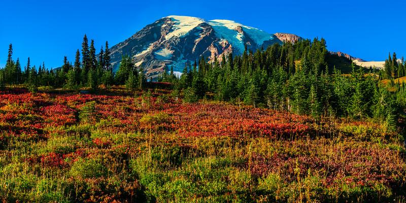 Fall color in Paradise meadow - Mt. Rainier