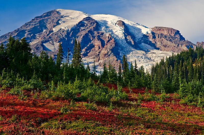 Paradise meadow, Mount Rainier in the fall
