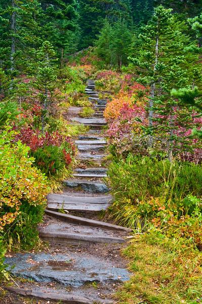 View up a trail near the Paradise River, Mount Rainier National Park