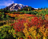 Mount Rainier Fall