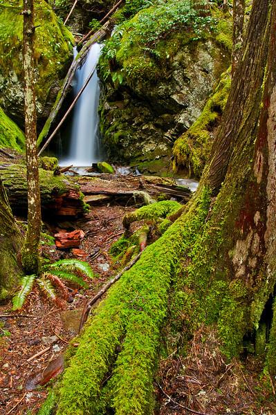 Mount Rainier Forest Waterfall