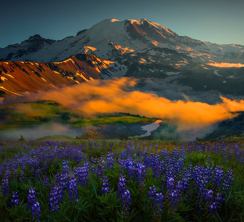 Lupine Sunset Looking Down Into Valley Of Mt Rainier - Mt Fremont Fire Lookout, Mount Rainer National Park, WA