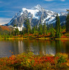 Mt Shuksan With Fall Foliage From Picture Lake_Vertical - North Cascades National Park, WA
