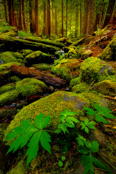 Looking Upstream Within The Sol Duc - Sol Duc Falls, Sol Duc Valley, Olympic National Park,, Washington
