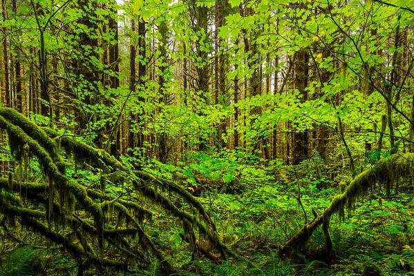 Framed In Green - Hoh Rainforest, Olympic National Park, Washington Olympic National Park, Washington