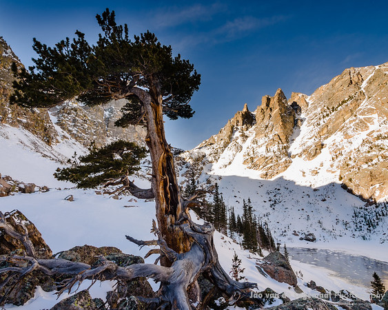 Braving the elements - Bristlecone pine and Dragon Couloir above Emerald Lake