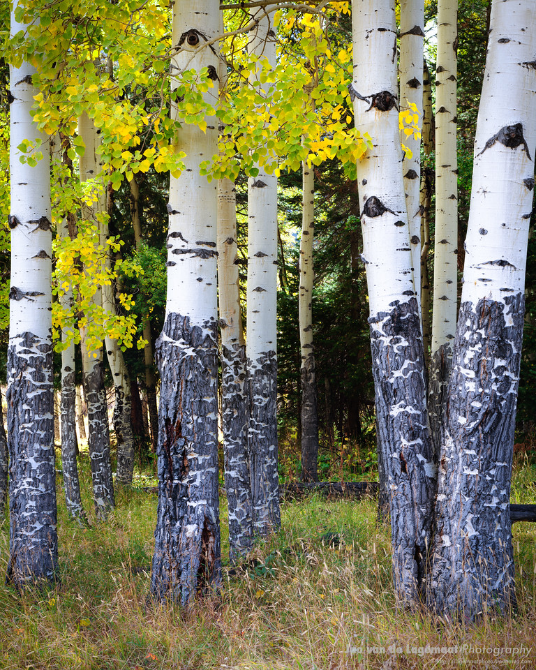 A rabble of trees