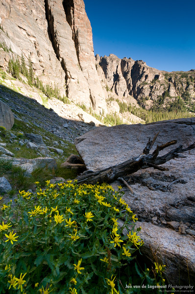 Late summer flowers high in Rocky Mountain National Park
