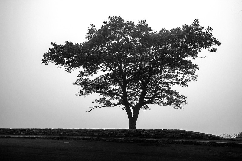Fog prevents a vista from one of the Skyline drive overlooks.