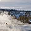 Bisen;  Yellowstone in Winter