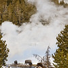 Bisen by geyser Bisen;  Yellowstone in Winter