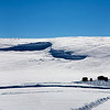 Bisen graze beneath a huge snow drift.  Yellowstone in Winter