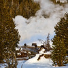 Bisen by geyser   Yellowstone in Winter